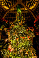Phipps Christmas Tree